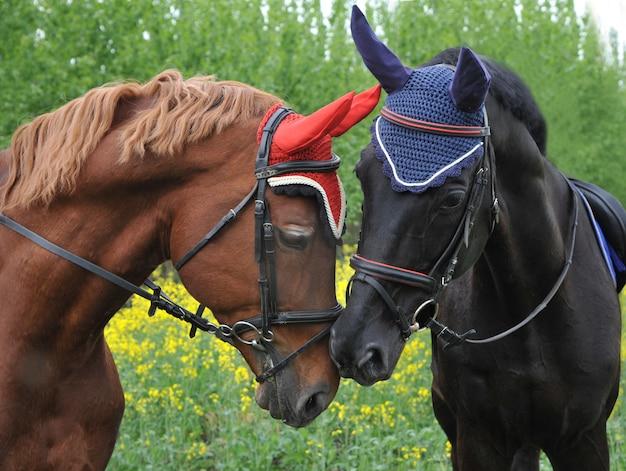 異なる色の馬にキスをクローズアップ