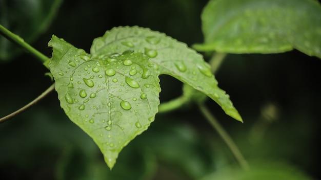 葉の上の水滴にクローズアップ