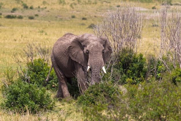 サバンナの茂みの中の象にクローズアップ