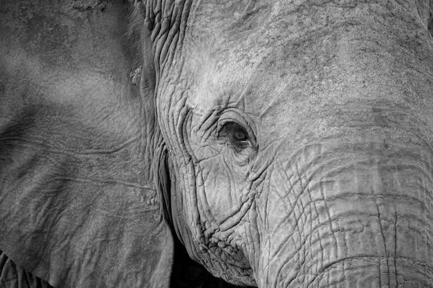 Крупным планом лицо одного большого красного слона