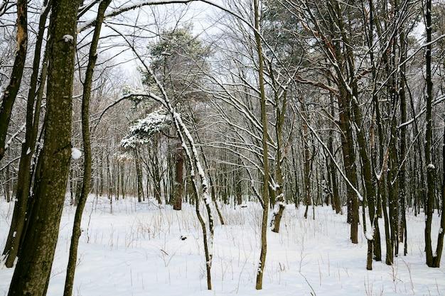 冬の森にクローズアップ