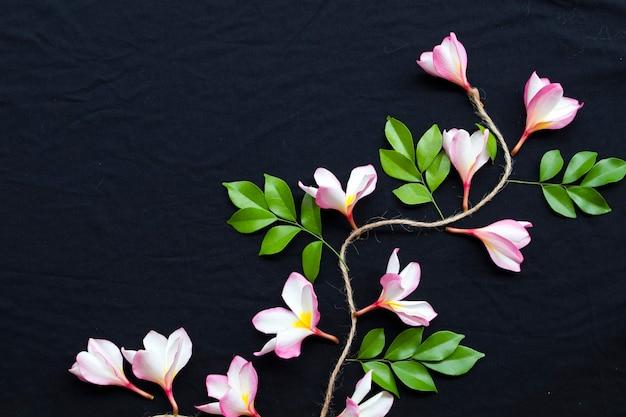 フランジパニピンクの花のクローズアップ