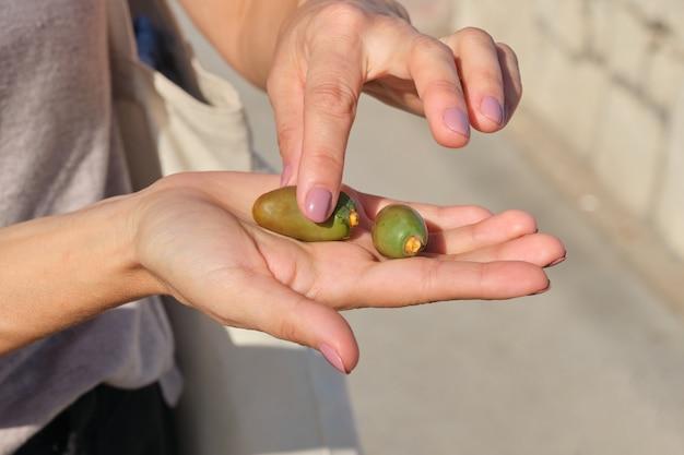 手に緑のナツメヤシの果実をクローズアップ