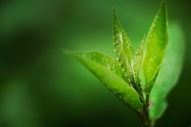 自然の中で緑の葉にクローズアップ
