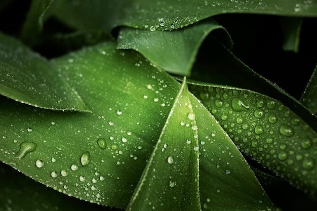 Крупным планом на зеленых листьях в природе
