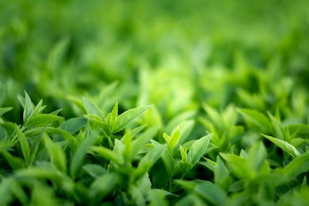 자연의 녹색 잎에 가까이