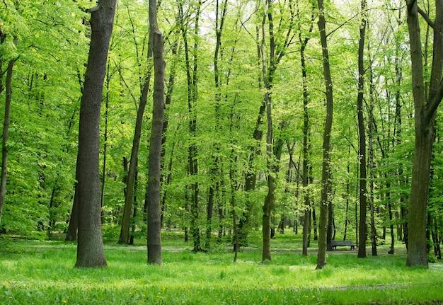 Крупным планом на зеленые стволы деревьев в весеннем парке