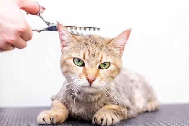 Крупным планом на уход за кошкой в салоне для домашних животных