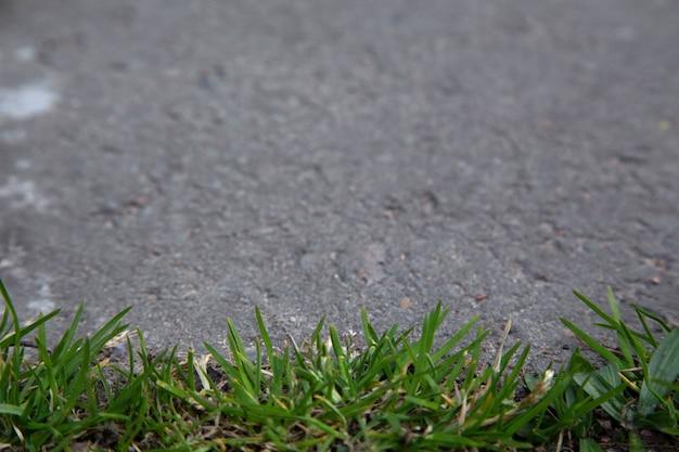Крупным планом на земле на открытом воздухе с зеленой травой и асфальтом