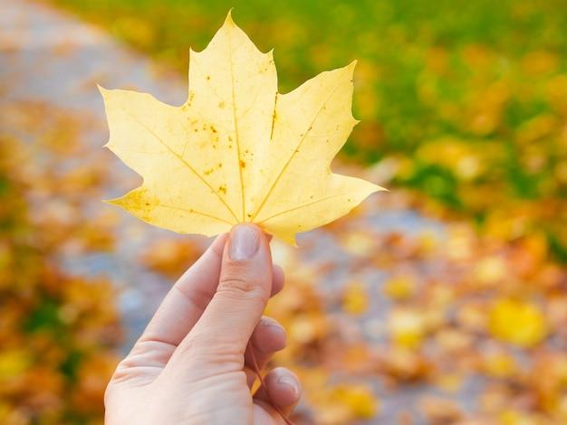 黄金のカエデの葉を持っている手にクローズアップ