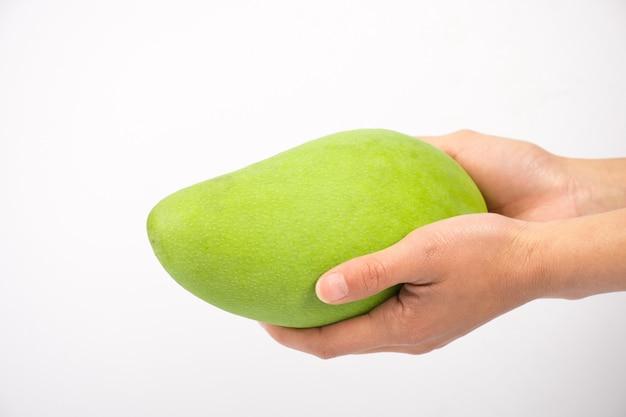 孤立した緑のマンゴーを持って手でクローズアップ