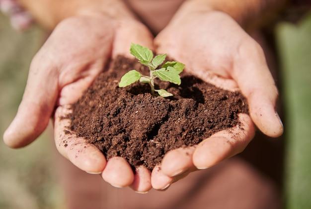 汚れのある芽を持っている手にクローズアップ