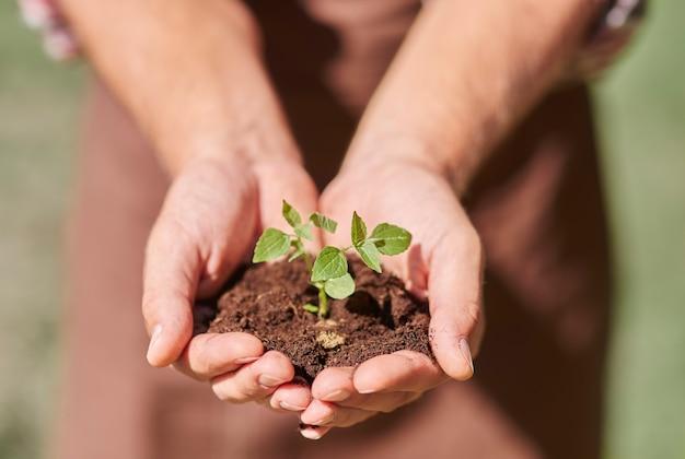 흙으로 새싹을 들고 손에 닫기