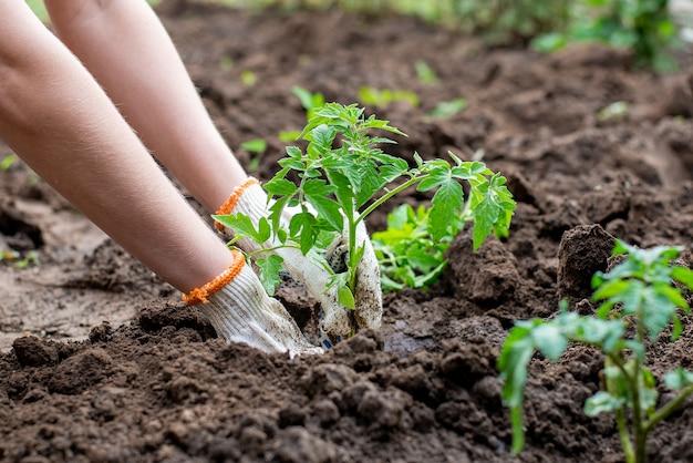 地面に小さな木を植える手にクローズアップ