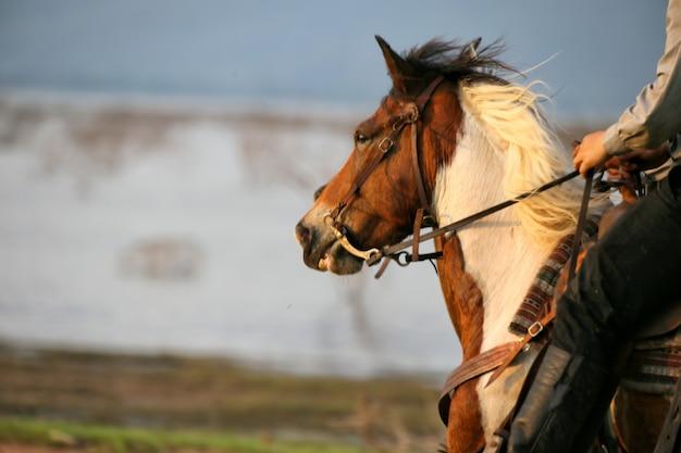 湖に向かって走っている馬の頭にクローズアップ