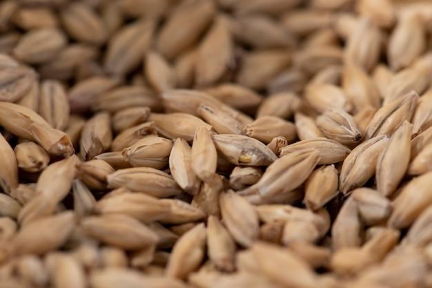 醸造用麦芽粒にクローズアップ