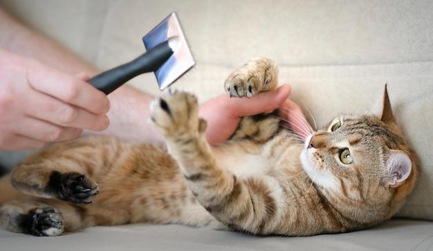 Крупным планом мужчина вычесывает кошку