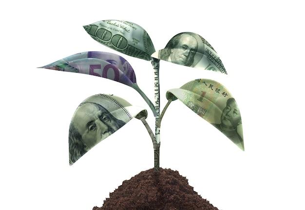 Крупным планом на концепции роста денег
