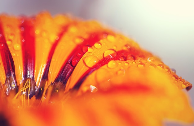 물 방울과 오렌지 꽃에 가까이