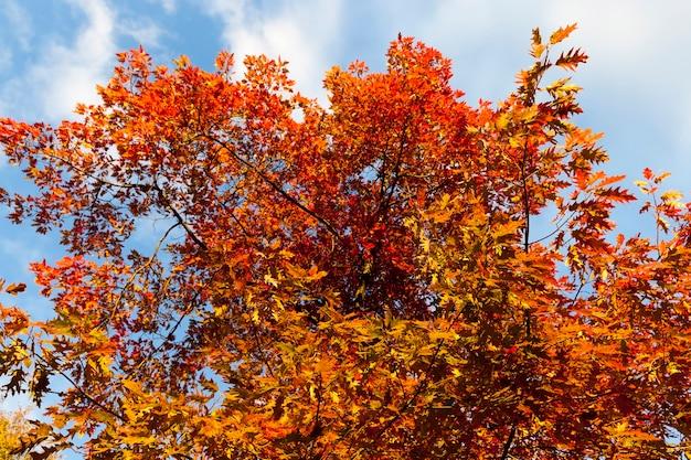 Крупным планом в парке осенью