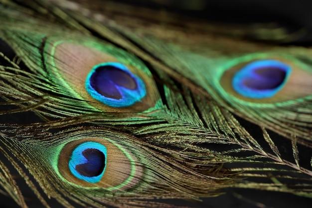 孔雀の羽の詳細をクローズアップ