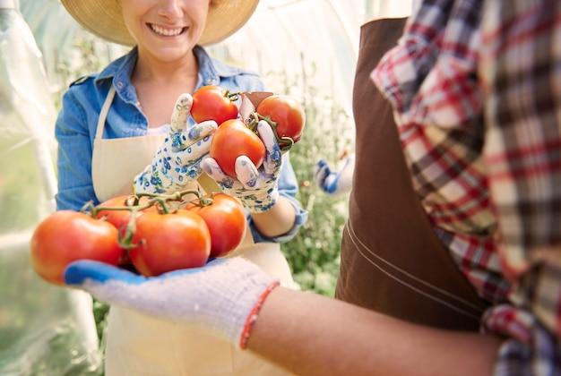 作物の世話をしている人々にクローズアップ
