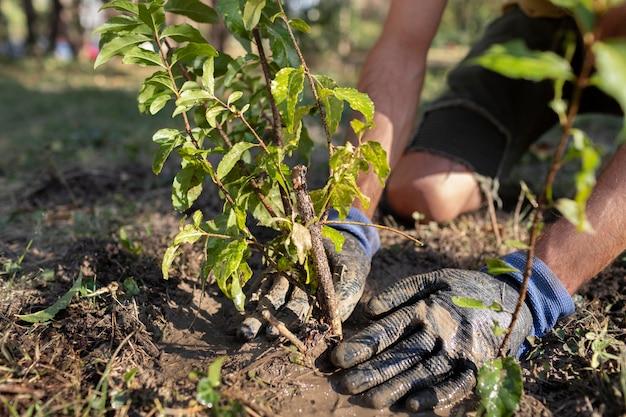 自然の中で新しい植物を植えることにクローズアップ