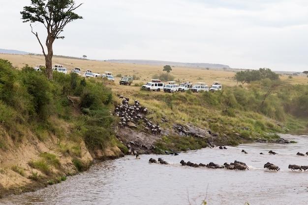 Крупным планом для обзора на реке мара Premium Фотографии