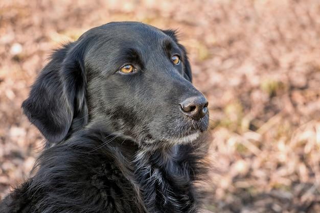 黒犬の肖像画にクローズアップ