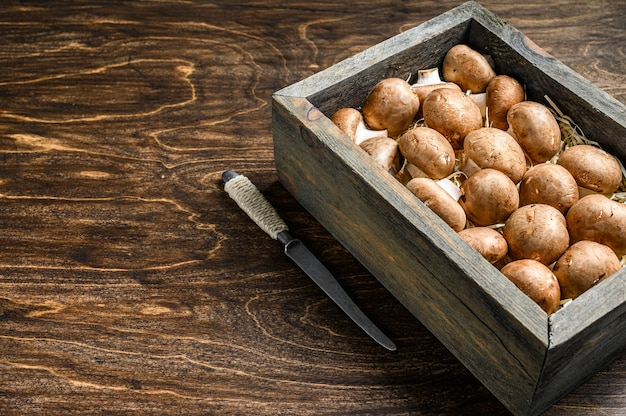 Крупным планом на сырых коричневых грибах шампиньонов
