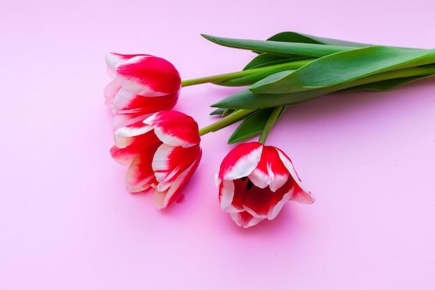 春と女性の日のコンセプトとして赤いチューリップにクローズアップ