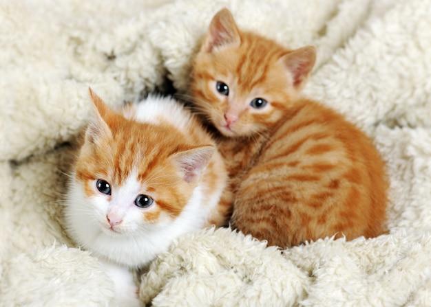 寄り添う小さなかわいい子猫をクローズアップ