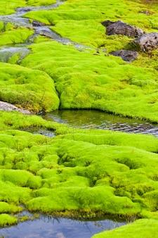 緑の苔で小さな川の流れにクローズアップ
