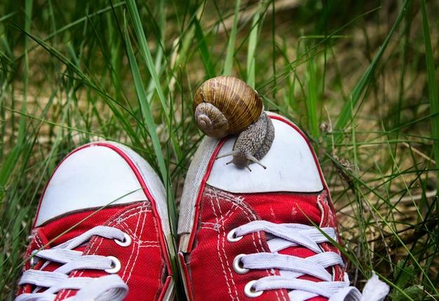 Крупным планом улитка, идущая по кроссовкам