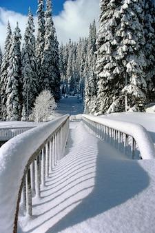 冬の森の雪景色にクローズアップ