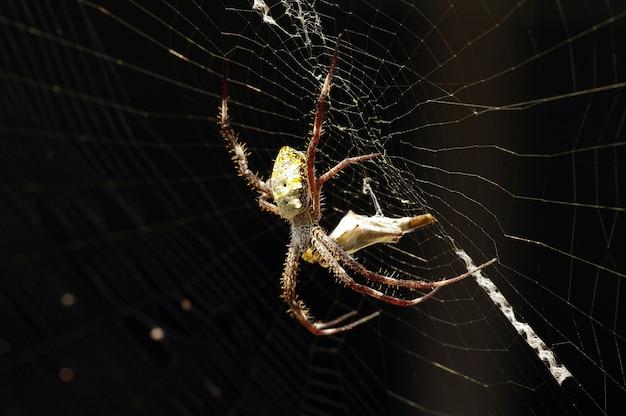 昼食を準備しているクモにクローズアップ