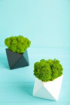 鉢の中の安定した苔にクローズアップ