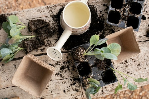 植物の移植プロセスのクローズアップ