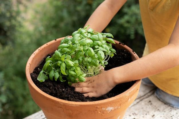 식물의 이식 과정을 닫습니다