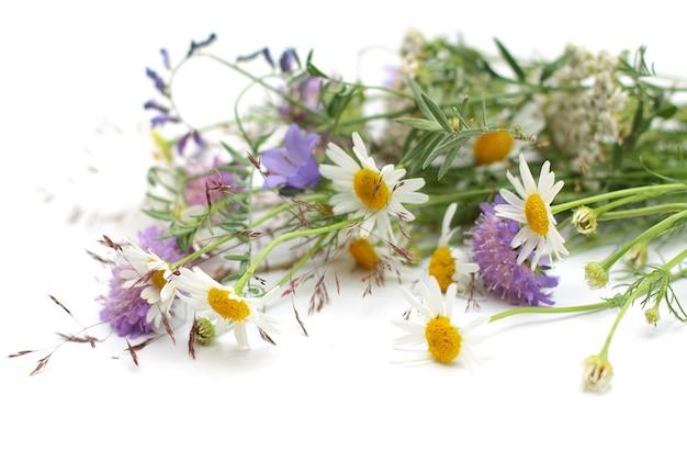 고립 된 다양 한 아름 다운 꽃에 가까이