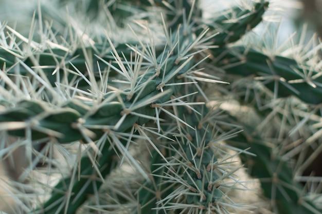 Крупным планом на очень колючий кактус, колючие кактусы на размытом фоне