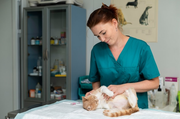 猫の世話をしている獣医にクローズアップ
