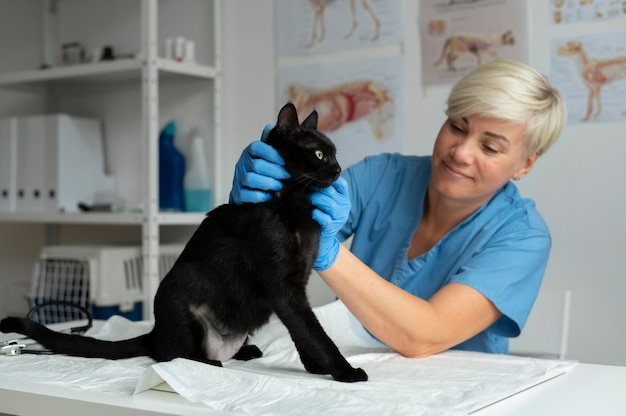 Крупным планом на ветеринар, заботящийся о кошке