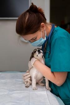犬の世話をしている獣医にクローズアップ