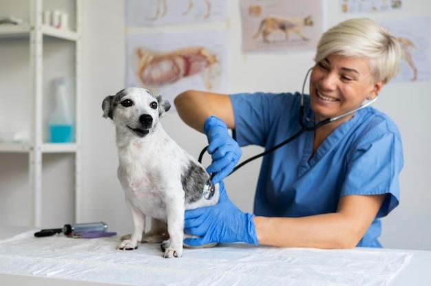 Крупным планом на ветеринар, заботящийся о собаке