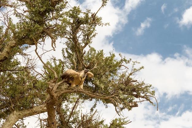 Крупным планом стервятник на дереве