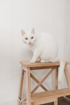 Крупным планом на белом коте, сидящем на стуле