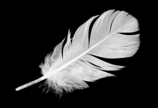 分離した白い羽のクローズアップ