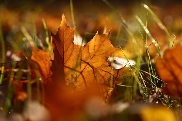 지상에 있는 잔디에 백라이트 오렌지 가을 낙엽 하나를 닫고 낮은 각도 보기