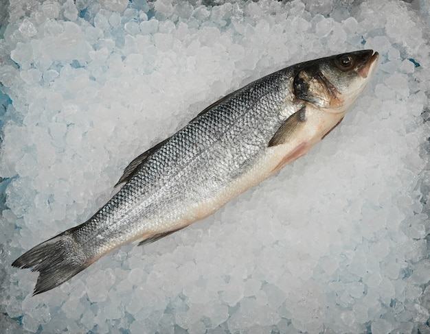Close up one fresh raw sea bass fish on ice, elevated top view, directly above